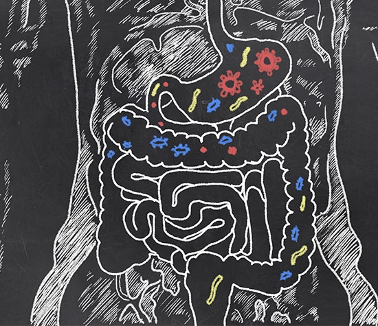 drawing of digestive tract
